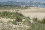 Il miraggio delle dune da noi ha vinto il cemento