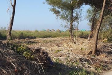 Alberi tagliati in area protetta, c'è un esposto
